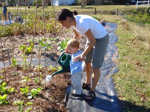 community garden 261